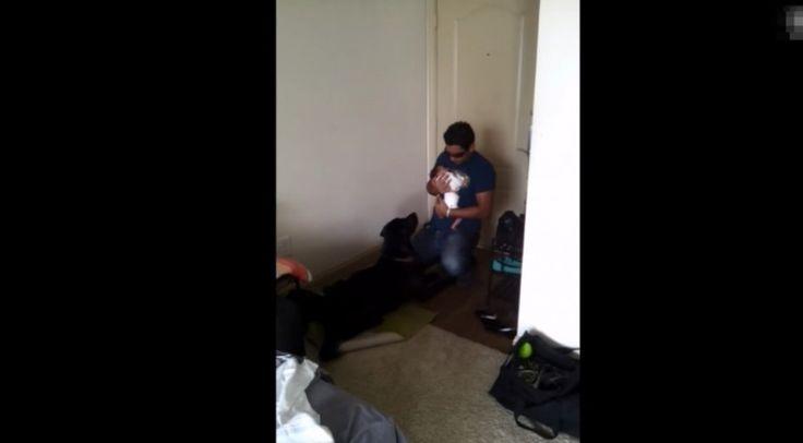 Μωρό και σκύλος η πρώτη συνάντηση! [Video]