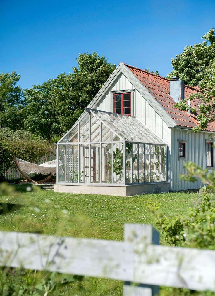 VÄXTHUS FÖRGYLLER FIN GOTLANDSVILLA: Bland de vidsträckta åkrarna bor Paula i ett idylliskt drömhus på Gotland. I växthuset börjar odlingssäsongen tidigt. Växthuset är sammanbyggt med huset. Här njuter Paula så fort våren är i antågande. Hon odlar vindruvor, tomatplantor och majs i de platsbyggda odlingslådorna.