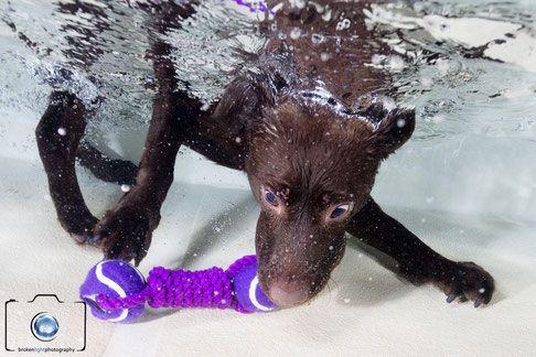 Hund unter Wasser in Berlin - wie bei Seth Castell