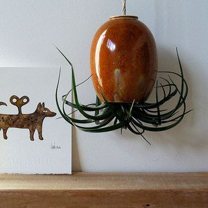 strange but cool #mudpuppy hanging air plants: Red, Plant Pod, Hanging Air Plants, Airplant, Ceramic, Brown, Gold, Products
