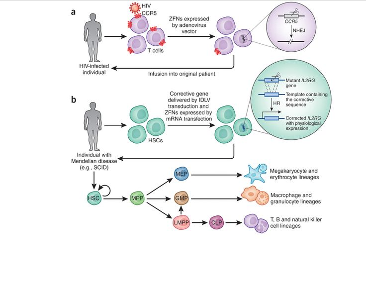 28 best ALL About Gene editing images on Pinterest Physical - new blueprint gene expression