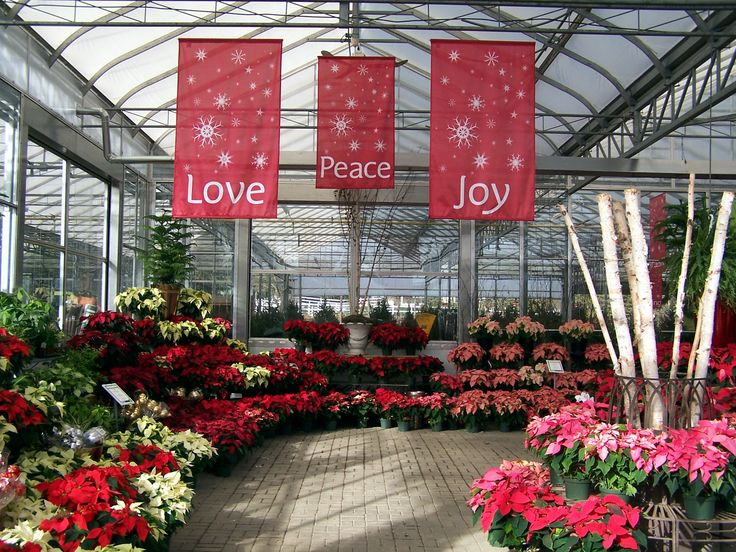 Christmas Banners in a Greenhouse.