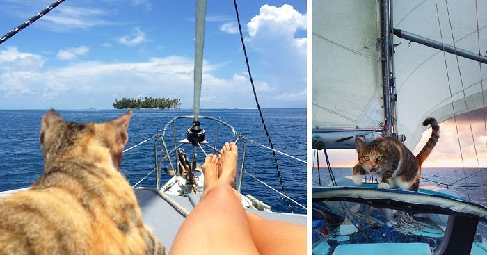 Woman Quits Her Job And Sails Around The World With Her Rescue Cat | Bored Panda