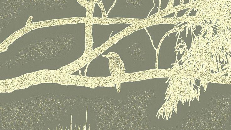 Gray and White Kookaburra Stretched Canvas https://www.etsy.com/au/shop/BlackbirdArtDesign