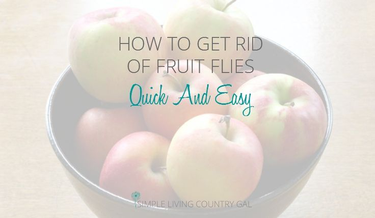 If you have fruit flies and want them gone without using chemicals, you've come to the right place!