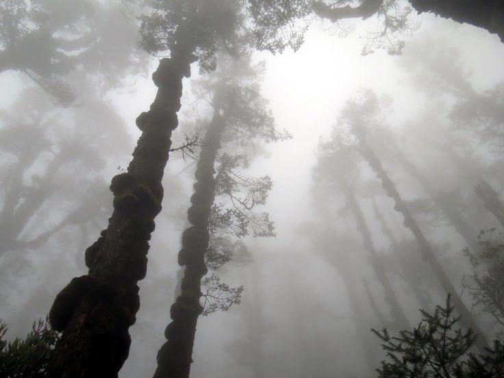Rain Forest Photo Credits: Raja Saha  Feature Photography - Rainy Day