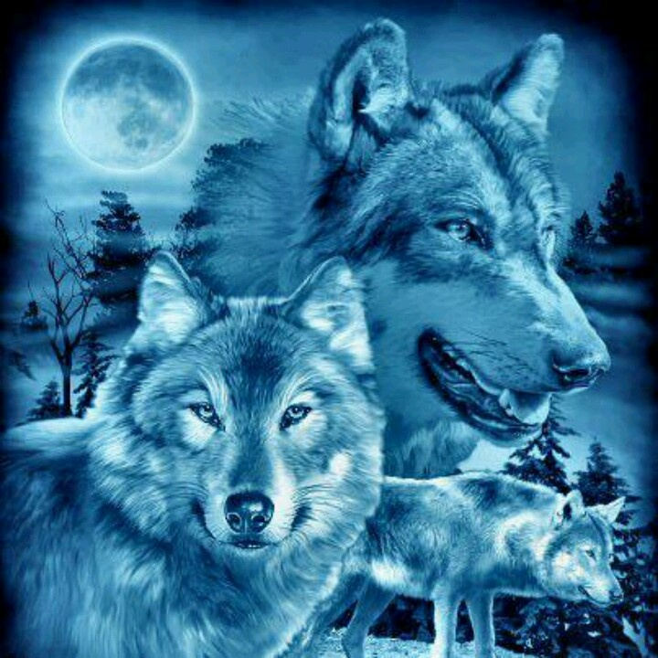 Girl Wallpaper Face Tattoo 33 Best Beautiful Wolves Pictures Images On Pinterest