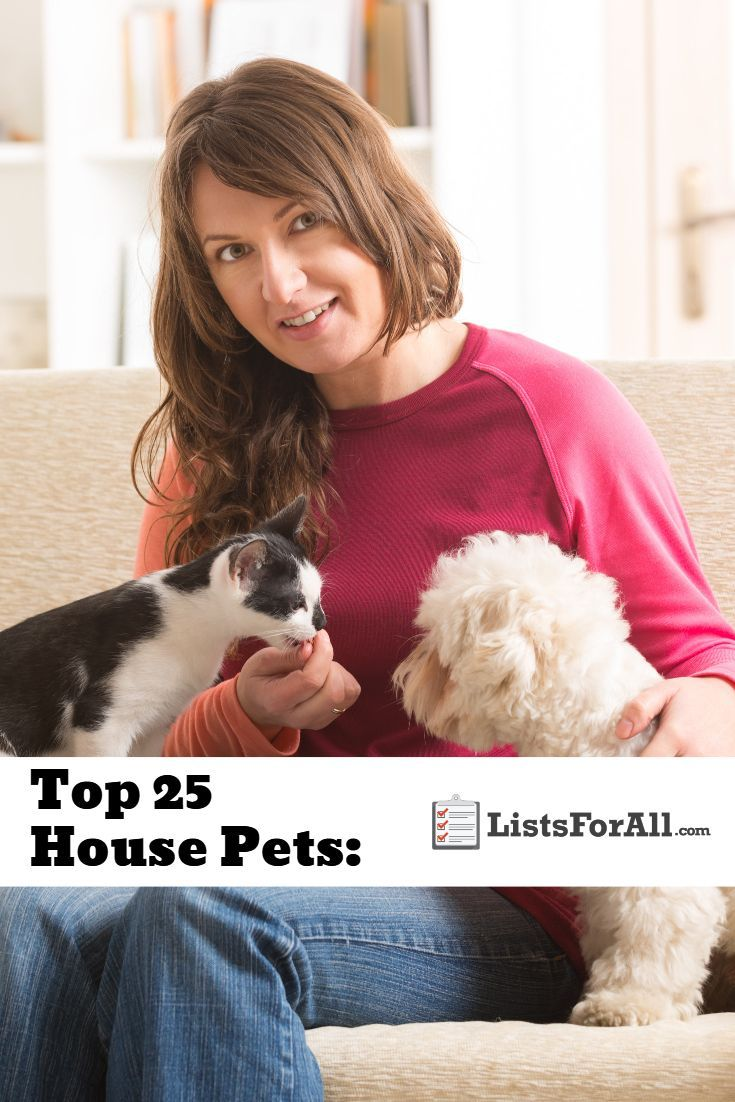 Best House Pets The Top 25 List In 2020 Animal House Pets Good House