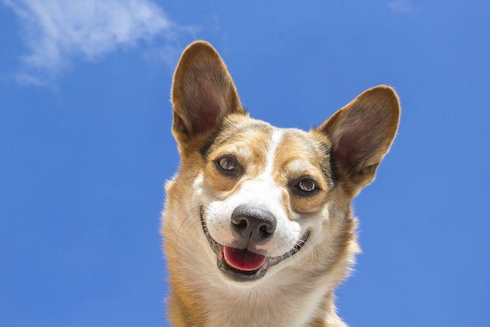 5 beneficios del sol en nuestras mascotas