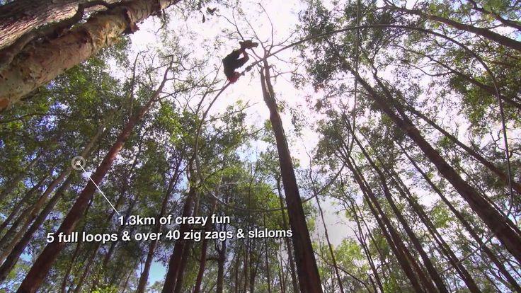 Treetops crazy rider, NSW