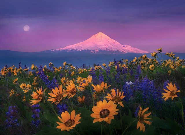 Shades of Morning: Mt Hoods Oregon, Columbia Hill, Natural Beautiful, Mount Hoods, Marc Adamus, Beautiful Places, Washington States, Flowers Power, Photo