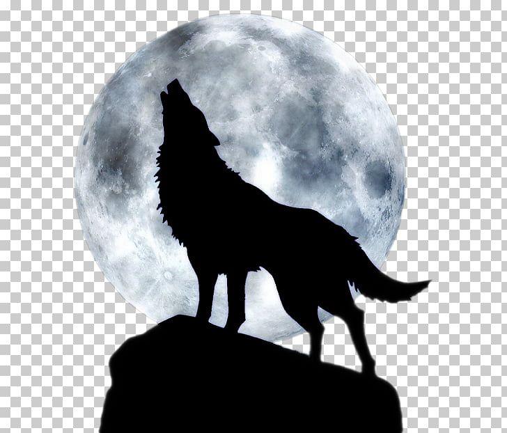 Pin By Dianfigo Dianfigo On G Three Wolf Moon Arctic Wolf Wolf Moon