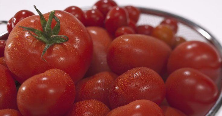 Quantidade de nitrato de cálcio por planta de tomate. Plantas de tomate requerem quatro elementos essenciais que garantem o crescimento saudável e uma produtividade máxima. Nitrogênio, cálcio, potássio e fósforo afetam o crescimento do tomate, mas de maneiras diferentes. A absorção destes quatro elementos é a diferencia. O nitrogênio é mais eficiente na forma de nitrato de cálcio. Excesso de ...