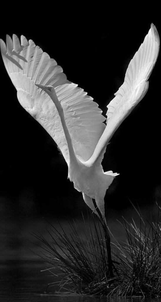 Nature sauvage | Maria Magdalena Ruiz O'Farrill