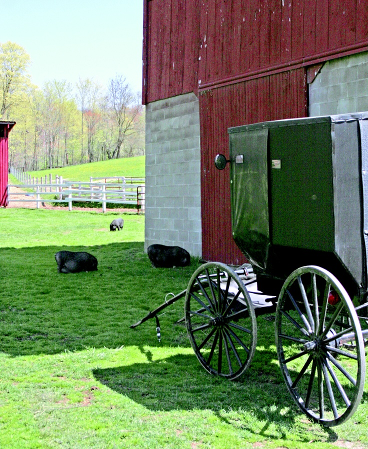 28 best things to do images on pinterest amish country for Amish country things to do