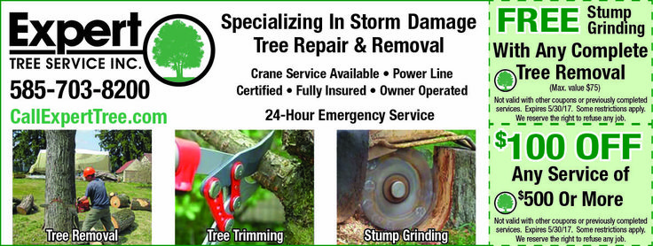 Expert tree service tree service tree care tree removal
