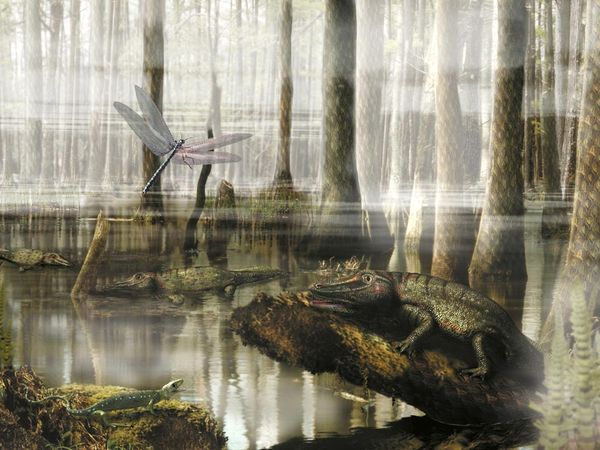 Carboniferous Period Photos, Carboniferous Period Photos -- National Geographic