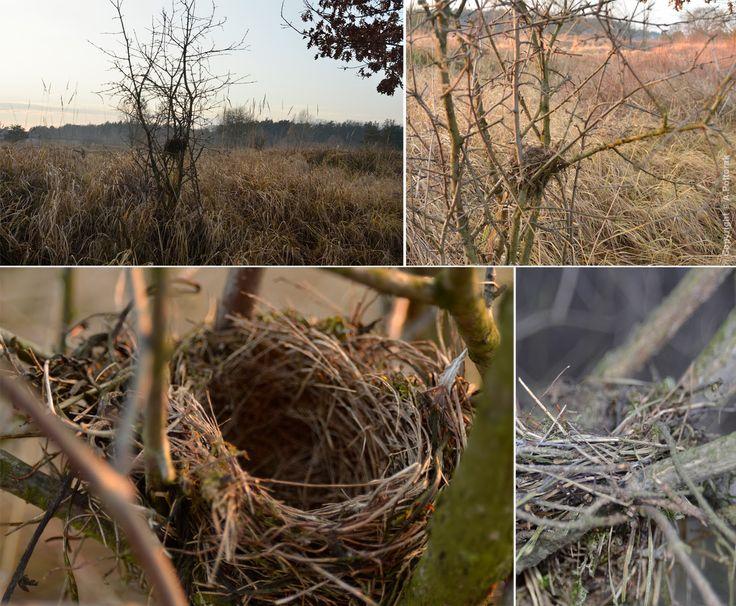 #nest #AdamPoltorak #bird