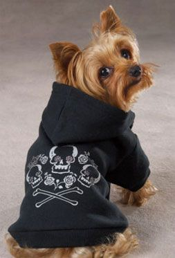 Image result for clothes puppies Yorkie