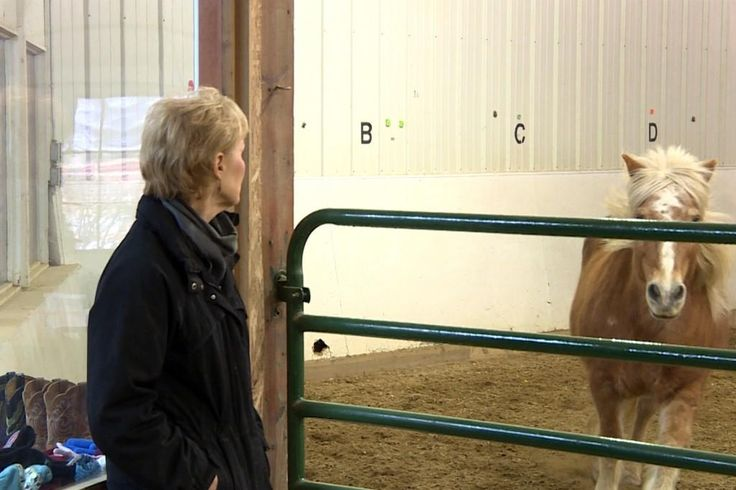 Horse-Assisted Therapy Helps Recovering Addicts