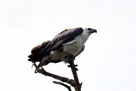#MonashGroup, Photo Gallery. #Arnhem land #Eagle www.monashgroup.com.au