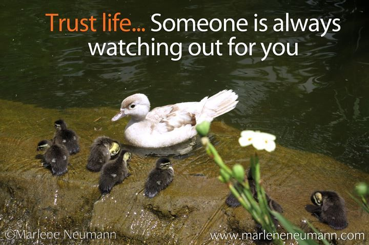 Trust life... Someone is always watching out for you... Inspirational quotes by Marlene Neumann. Photographer, teacher, author, philanthropist, philosopher. Marlene shares her own personal quotations from her insights, teachings and travels. Order your pack of Inspirational Cards! www.marleneneuman...