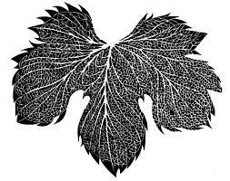 Risultati immagini per texture foglie photoshop