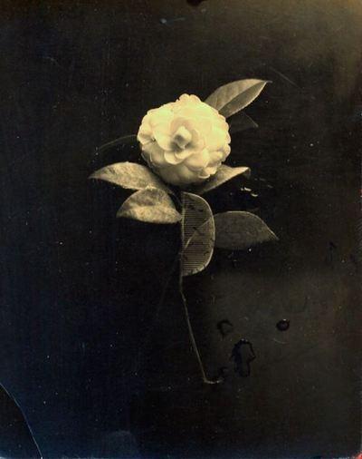 Masao YamamotoFloral Imagery, Masaoyamamoto, Artists, White Flower, Vestige Yamamoto, Silver Prints, Gelatin Silver, Classic Black, Flower Photography