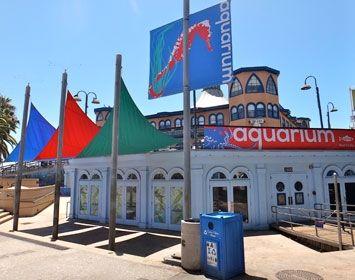 Santa Monica Pier Aquarium - Santa Monica, CA - $5/person