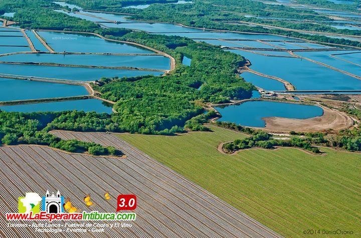 Plantaciones de melón y granjas de cultivo de camarón en Marcovia, Choluteca