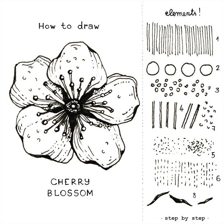 Alice On Instagram Cherry Blossom Cherry Blossom Step By Step I Can Assure You It Cherry Blossom Drawing Flower Drawing Flower Drawing Tutorials