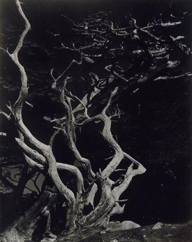 Point Lobos, CA by Edward Weston on artnet Auctions