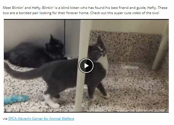Blind Shelter Kitten And Guide Cat Best Friend Will Melt Your Heart Shelter Kittens Cats And Kittens Modern Cat