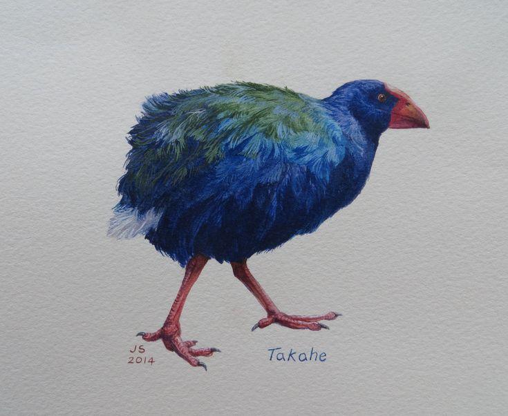 Takahe  watercolour Jane Sinclair