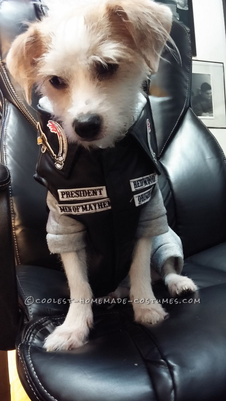 Jax Dog Costume from Sons of Anarchy... Coolest Halloween Costume Contest