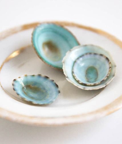 Different shades of seafoam against a vintage gold and white china plate