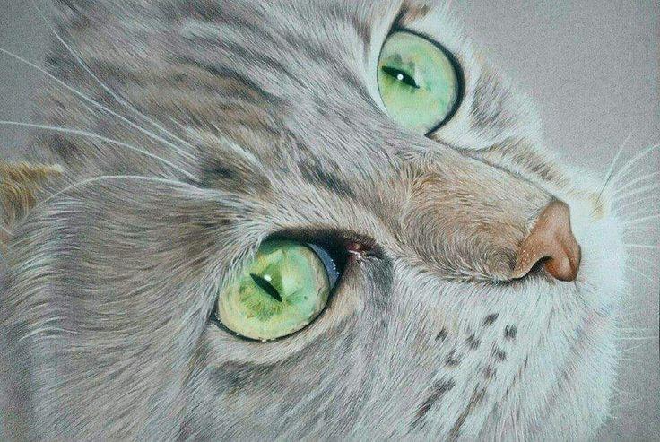 Cat portrait by Katie Bowman www.personalartwork.co.uk