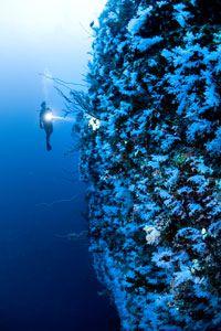 Great white Wall #Fiji #scuba diving