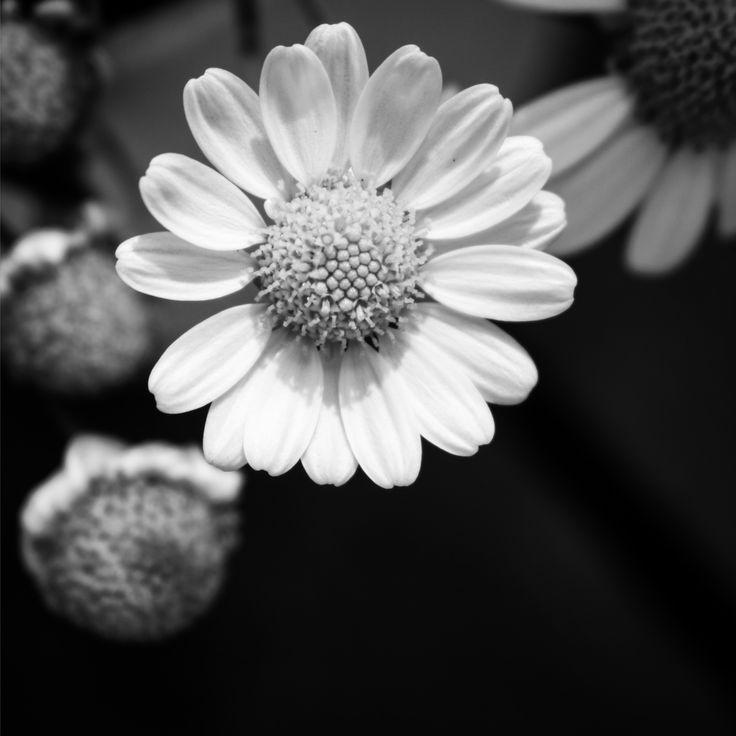 Macro. Flower