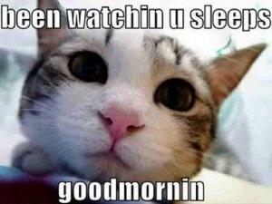 <3: Kitty Cat, Good Mornings, Dogs, Funny Cat, Pet, Funny Images, Kittens, Cat Meme, Animal