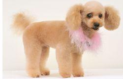 イヤーマフ・スタイル : ヘアスタイルカタログ | 犬の総合情報サイト「愛犬の友オンライン」|誠文堂新光社