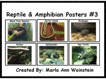 Reptile & Amphibian Posters #3 includes six posters that can be displayed or placed in a Science Center. These posters are GREAT for all ages!FYI: You can earn credits to use at various TPT stores by providing feedback for purchased products. Please click the star at the top of the page to follow me if you would like notification when I post a new product.