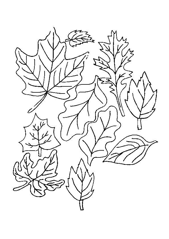 Les 318 meilleures images du tableau coloriages de fleurs - Dessin feuille morte ...