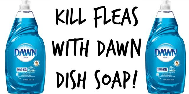 Kill Fleas with Dawn Dish Soap by Irresistiblepets.com