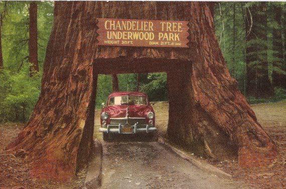 California Postcard Retro Car Chandelier Tree Underwood