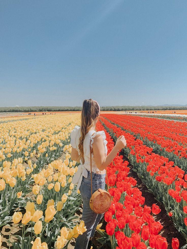 The Prettiest Blouse Tulip Fields In 2020 Tulip Fields Tulip