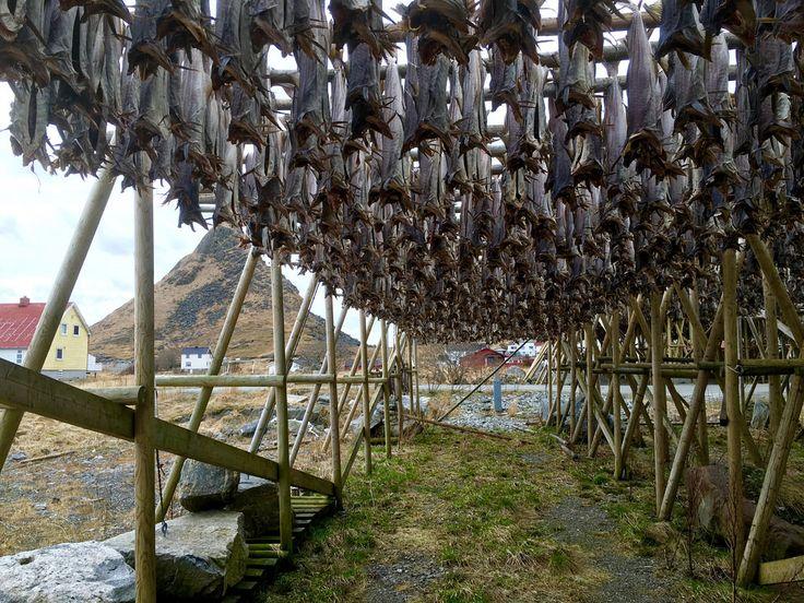 Fiskehjell på Værøy, Lofoten