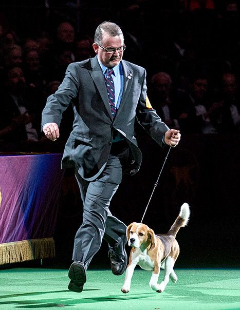2015 Best in Show Westminster Dog Show