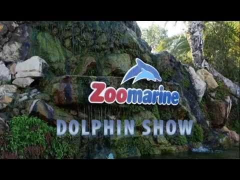 Dolphin Show Zoomarine - YouTube