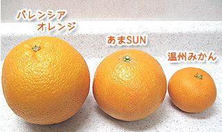 あまさんは正式には「あまSUN」と書きます。(この名前になる前は「天草」と言う名前だった)  沖縄の方言で「甘い」ことを「あまさん」と言い、この果実色が沖縄のサンサンと照り輝く太陽をイメージさせることから「SUN」が用いられたそうです。 あまSUN  「甘い」「太陽」を組み合わせ、このミカンのことを「あまSUN」と命名されたと言うわけです。   温州みかんとバレンシアオレンジを交配してできたミカンで、大きさも温州みかんとバレンシアオレンジの中間サイズ。そのため、オレンジに似ているので、手で皮を剥かずに、ナイフでカットして食べるのが普通らしいですよ。